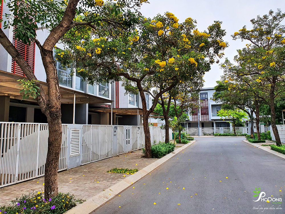 Khu Biệt Thự Compound Cao Cấp Sol Villas Spring Colorful Flowers Vibrate On The All 24 Routes Of Phodong Village